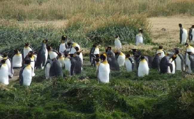 maravillas de Valdivia
