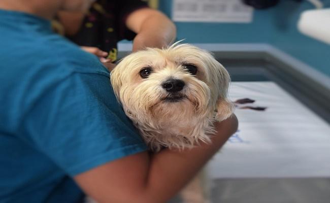 Veterinaria Municipal para mascotas en Valdivia