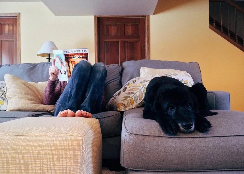 espacio en casa para tu perro.0